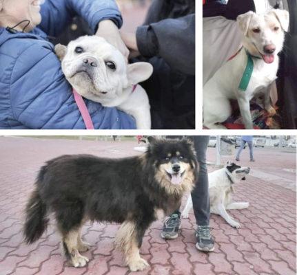 Pese al aislamiento obligatorio y preventivo, 28 perros ya tienen una familia permanente