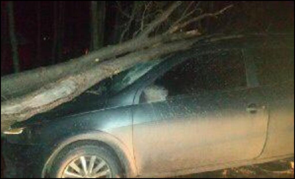 Un vehículo fue aplastado por un árbol